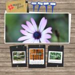 Maryflower website